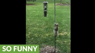Clever squirrel outsmarts slinky at bird feeder