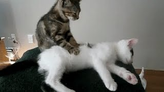 Funny Videos 2015 - Funny Cats Video - Funny Cat Videos Ever - Funny Animals Funny Fails 2015