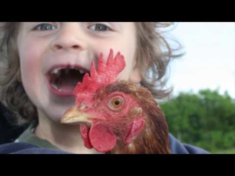 Childfriendly Family Holidays at Little Comfort Farm, Devon