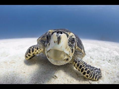 Underwater Photography Using a DPV - Cayman Jason