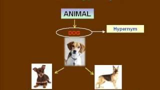 Hyponymy & Meronymy Part 1 - Hyponymy