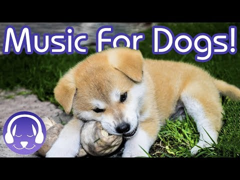 How to Calm Your Dog! Brand NEW Reggae Music for Dogs! 2018