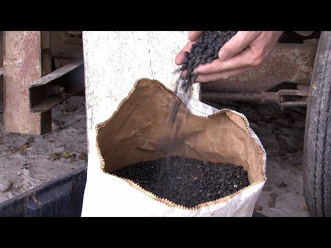 growing-black-beans