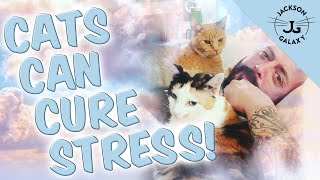 Your Cat Can Be Your Best Stress Reliever
