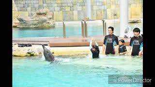 Dolphin Island Sentosa Adventure Cove Waterpark