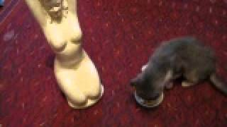 Кошки в сети.Влюбленный кот./Fanny cats./Cat kisses a doll/Смешное видео про кошек.