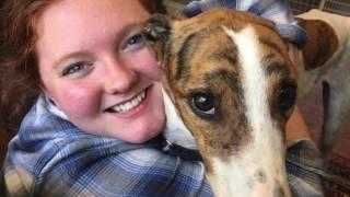 Getting Gary - A Greyhound Adoption Story