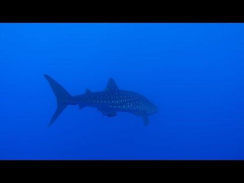 mexico-(revillagigedo-archipelago-and-sea-of-cortez)