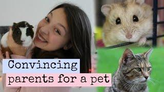 Convincing Your Parents For A PET | Hamster HorsesandCats