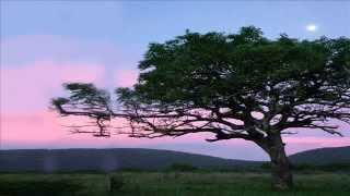 African Sound - Relax at the Savannah