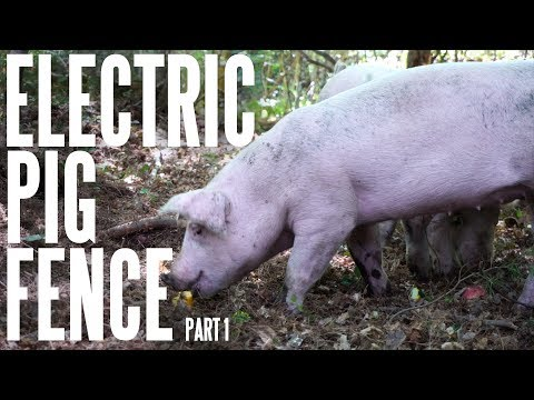 Pigs 101: Basic 2 Strand Electric Fence For Hogs On The Homestead - Part 1