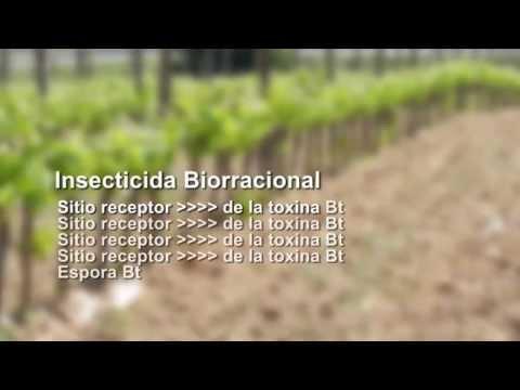 Descubre La Verdad Sobre Los Bacillus Thuringiensis - I Parte