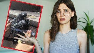 Nastolatki wbiły widelec w gołębia i wrzuciły to na Snapchata