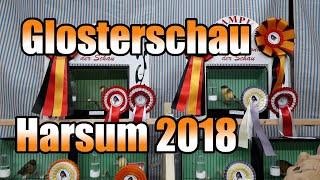 Gloster auf der Spezialschau in Harsum/Asel 2018 | Germany | 10.11.2018