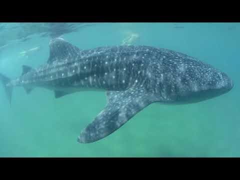 Best of Spearfishing    Hawaii    Australia    California   