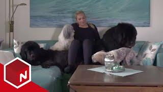 Adriane Har Seks Hunder | Et Hundeshow | Discovery Norge