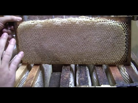 Tricks to get honey off bees!