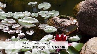 Canon EF 75-300 mm f/4-5.6 III - Tele-Zoom für 100 Euro im Test | #VTUrlaubsvertretung