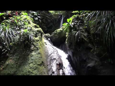 Canyon en Guadeloupe avec Vert Intense