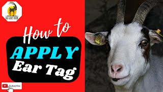 How to apply Ear Tag