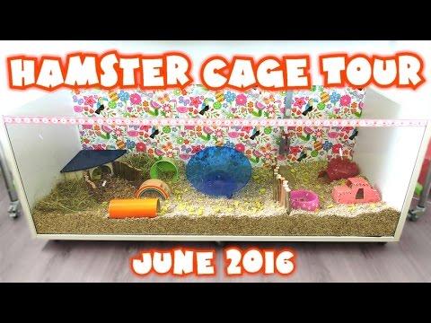 Misty's Hamster Cage Tour - June 2016