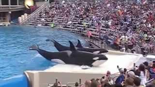 9..Шоу Касаток, киты-убийцы.SeaWorld in San Diego USA.