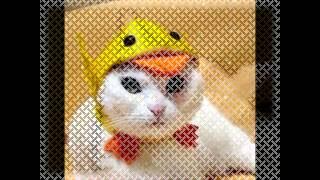 Смешные коты видео. Подборка. Видео про котов 2015