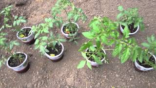 Planting Spring Garden Tomatoes, Summer Squash Seeds And Cucumber Seeds - April 17, 2013