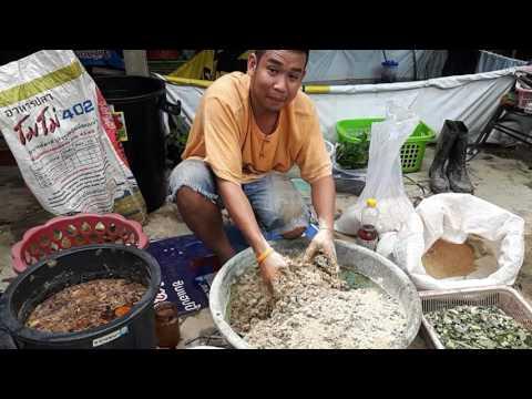 วิธีทำอาหารปลา เพื่อช่วยลดต้นทุนในการเลี้ยงปลา