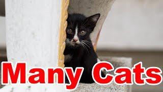 [Thailand] Many Cats Temple / Wat Bang Phli Klang thumbnail