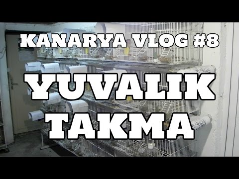 Hobihanem - Kanarya Vlog #8 (Yuvalık Takma) [17.03.2017]