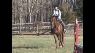 Gossip Girl @ Calais Horse Trials November 2014 Jumping
