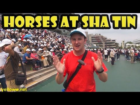 Hong Kong Horse Racing at Sha Tin Travel Guide