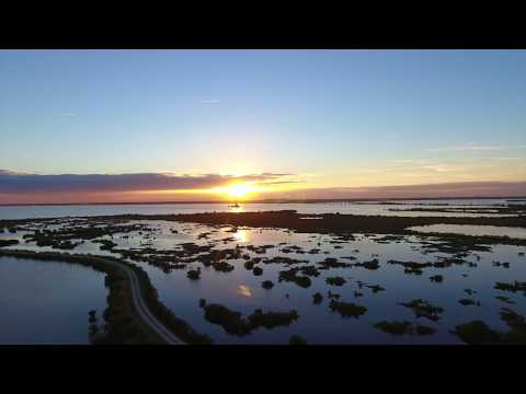Merritt Island Wildlife Refuge - 4k