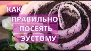 Как Правильно Посеять Эустому. ♥ Конкурс-Розыгрыш от MiniFermer.ru