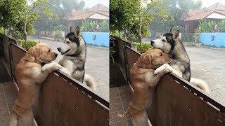 Einsamer Hund läuft von Zuhause weg, um seine beste Freundin zu umarmen...