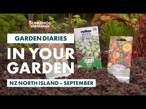 Gardening In September   NZ North Island   Bunnings Garden Diary