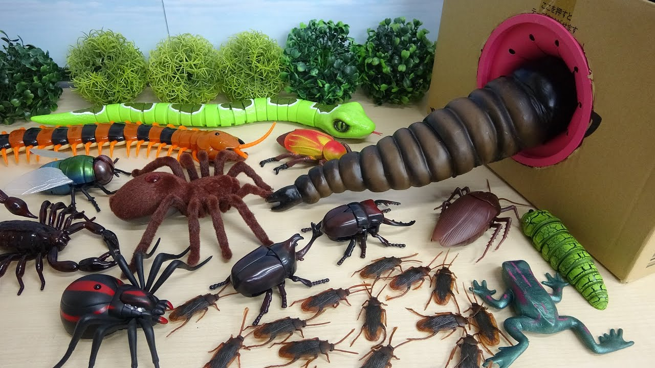 Download Various Monster Insects and Bugs step into Big Takilong's Box in a row