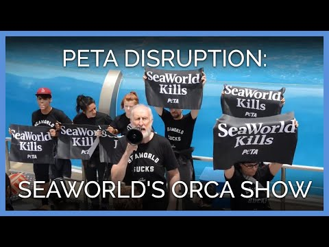 James Cromwell and PETA Take Over SeaWorld's Orca Show