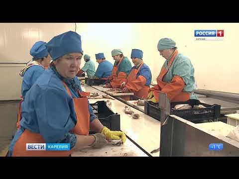 В Сортавале начали перерабатывать и упаковывать рыбу