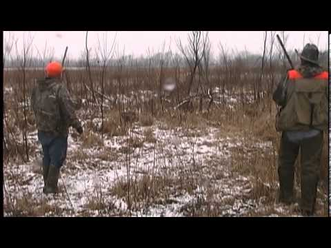 Pheasant Hunting In Iowa & Illinois