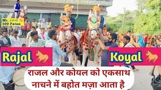 Varghoda ni moj Rajal 🐎 & Koyal 🏇 Mitul Patel & Team Mr. कनबी 🐎 500 Patan Horse Lover Horse Rider