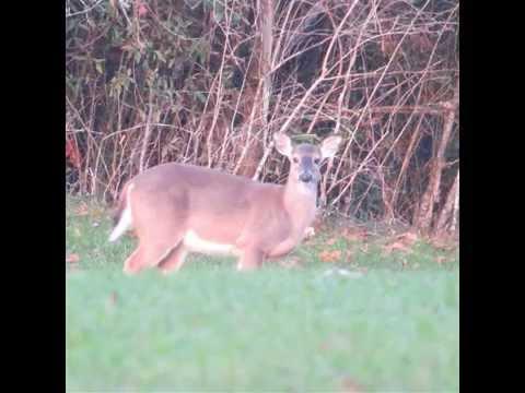 Wilcox Academy Deer Hunt 2015