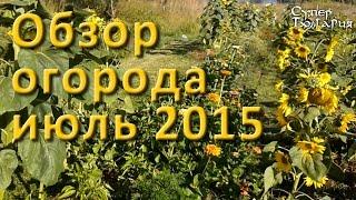 Огород своими руками. Обзор от 18 июля 2015 г. Природное земледелие