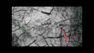Hay River Dinosaur Tracks?