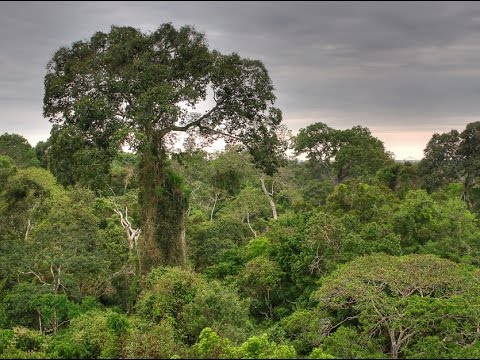 Posada Amazonas Lodge by Rainforest Expeditions