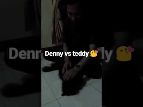 Denny Vs Teddy 😍