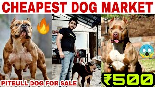 Dogs at cheap price /  Pitbull puppy / pitbull dog/American Bully sale in delhi #
