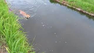 モモがスリル満点の川下りです(笑)