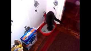 Империал (IMPERIAL CARE) с SILVER IONS ультра-комкующийся наполнитель в кошачий туалет(, 2014-05-07T12:48:12.000Z)